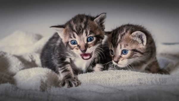 kittens, couple, cats