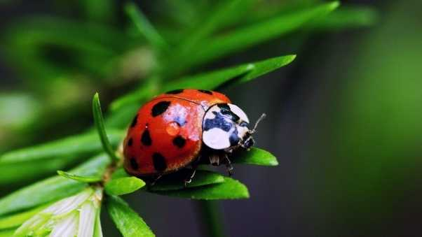 ladybird, color, stains