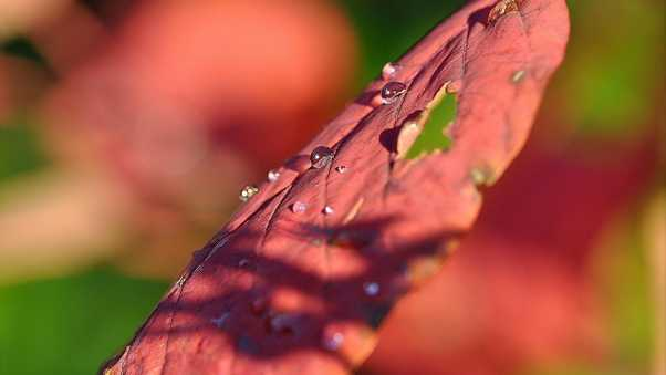 leaf, drop, surface