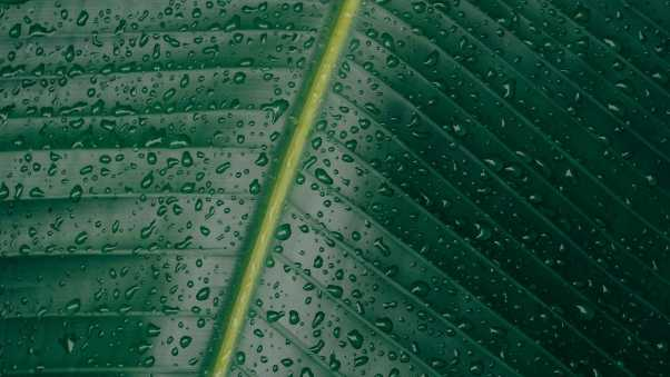 leaf, surface, drops