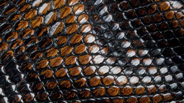 leather, snake, surface