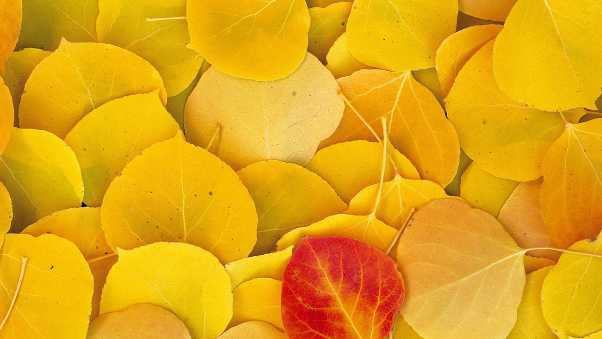 leaves, autumn, close-up