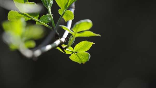 leaves, branches, plant