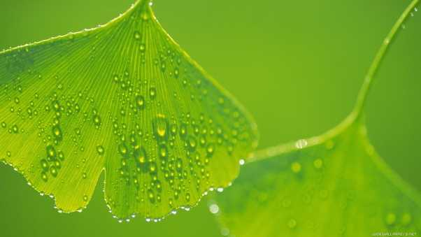 leaves, drops, surface