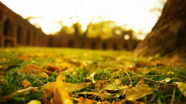 leaves, earth, grass