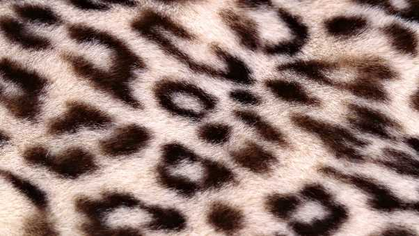 leopard, background, texture