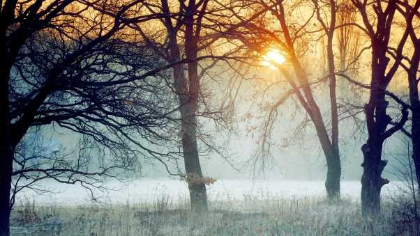 morning, forest, trees