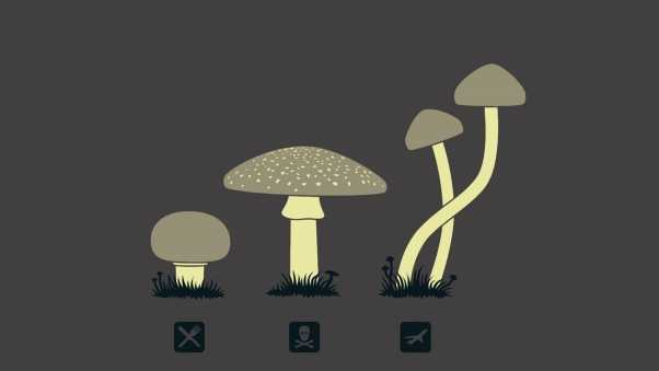 mushrooms, drawing, kind
