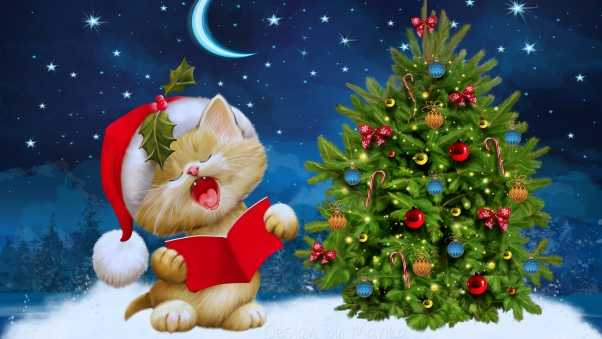 new year, christmas, cat