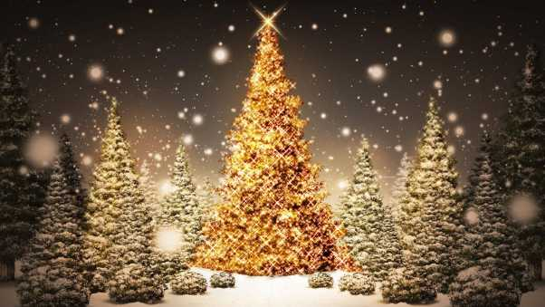 new year, christmas, trees