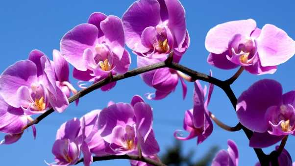orchid, flower, branch