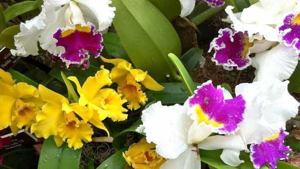 orchids, flowers, herbs