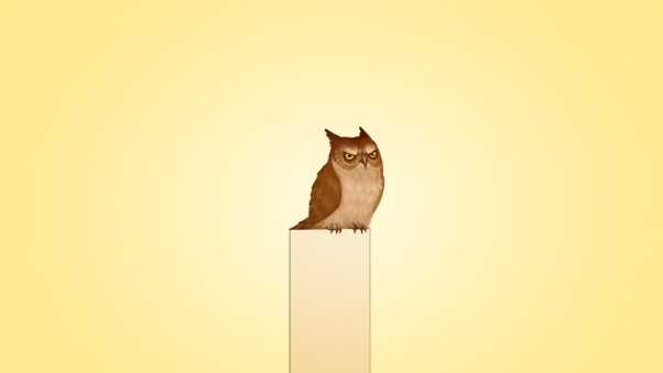 owl, picture, post