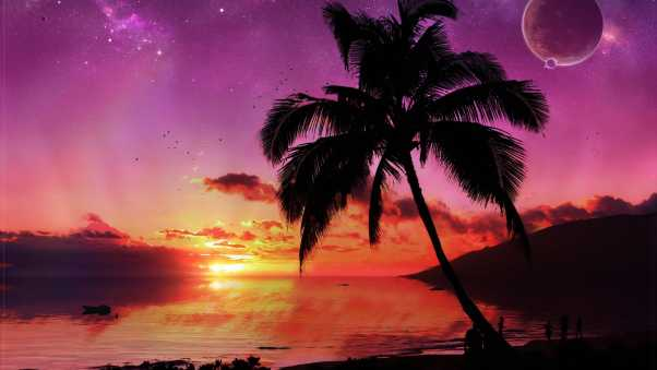 palm tree, tree, evening