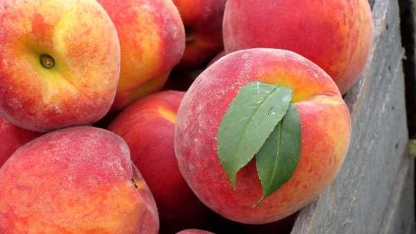 peaches, leaves, fruits