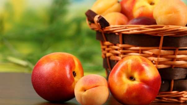 peaches, nectarines, apricots