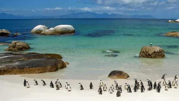 penguins, sand, sky