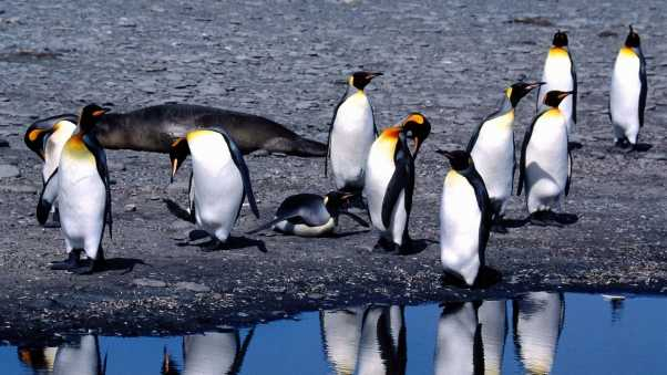 penguins, summer, thaw