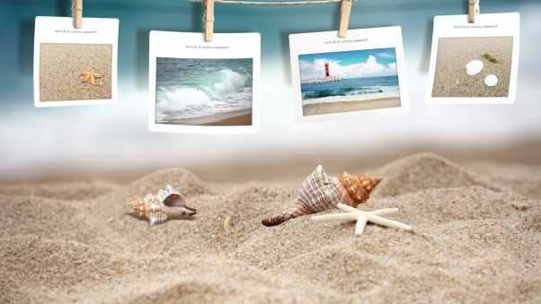 photography, beach, shells