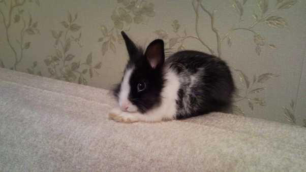 rabbit, furry, spotted
