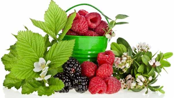 raspberries, basket, berries