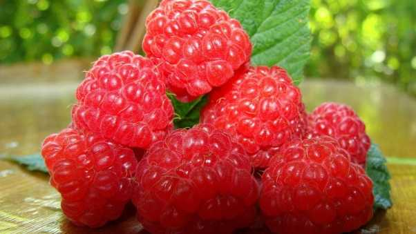 raspberries, ripe, berry