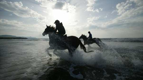riding, horses, splashes