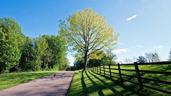 road, protection, tree