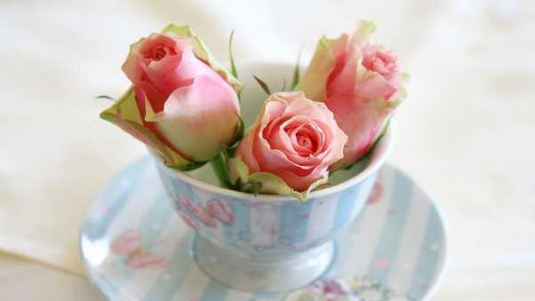 roses, buds, cup