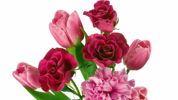 roses, tulips, carnations