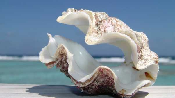 shell, sea, beach