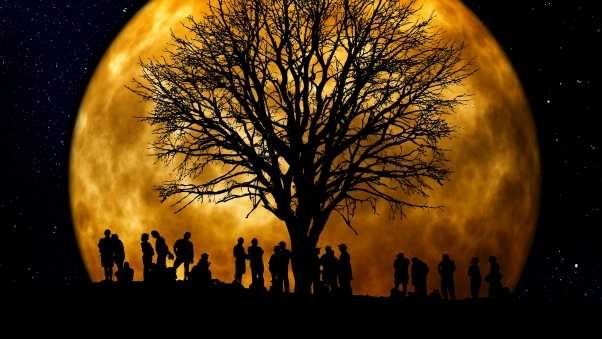 silhouettes, tree, people