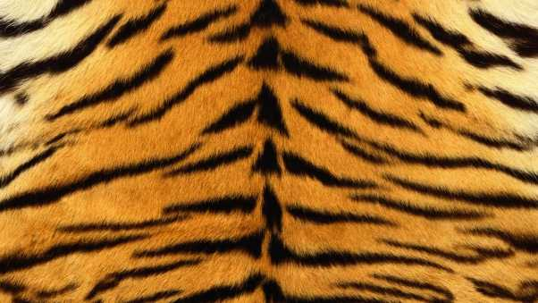 skin, tiger, stripes
