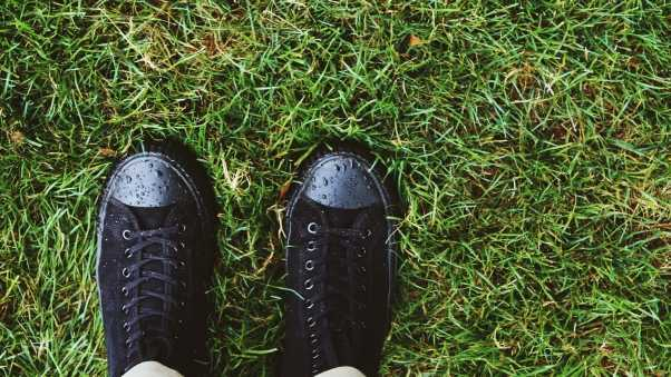 sneakers, grass, drops