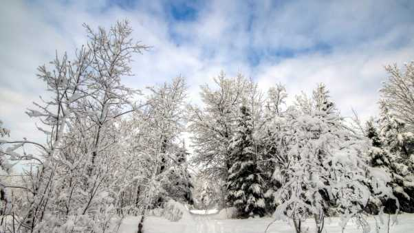 snow, forest, winter