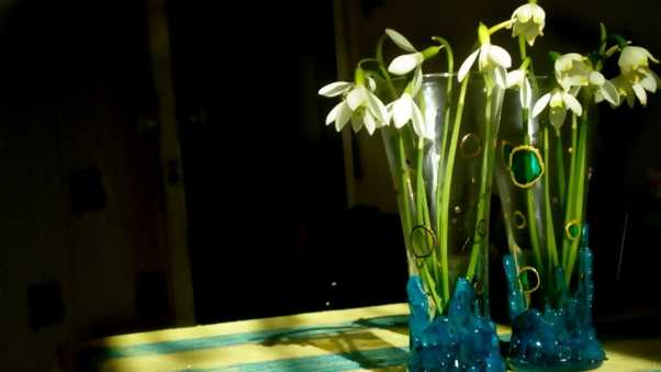 snowdrops, flowers, spring