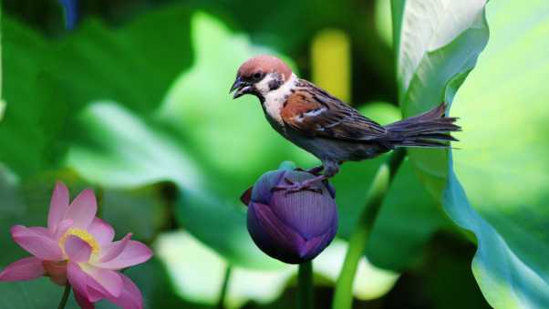 sparrow, lily, flowers
