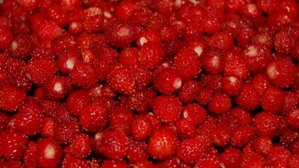 strawberries, red, berry