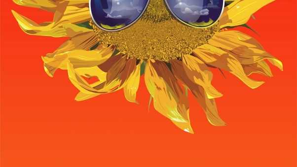 sunflower, glasses, flower