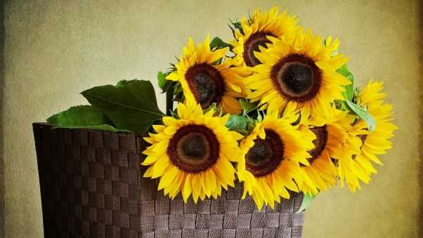 sunflowers, shopping, wall