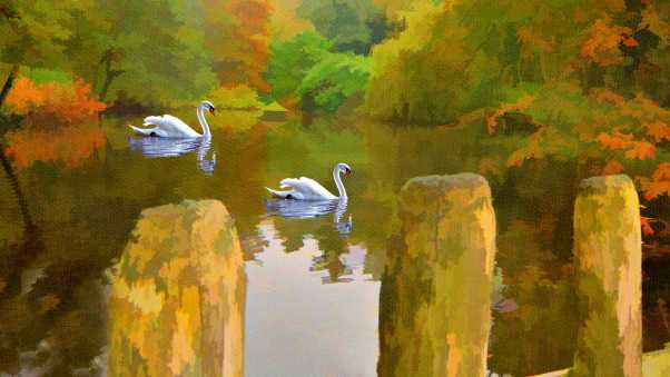swan, lake, picture