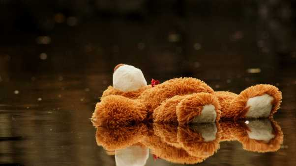 teddy bear, toy, pool