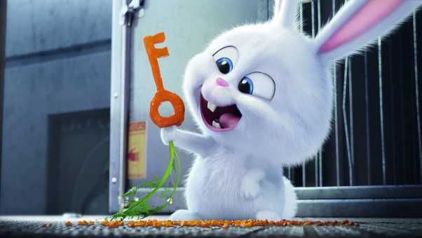 the secret life of pets, 2016, rabbit