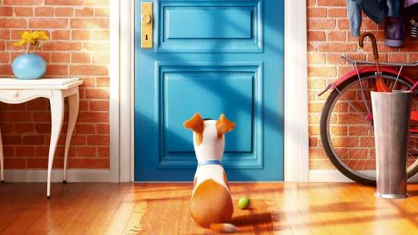 the secret life of pets, max, dog