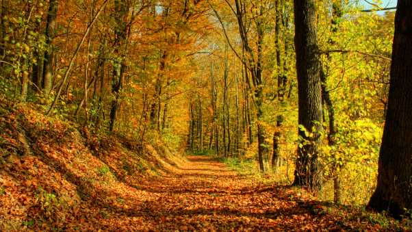 trail, leaves, autumn