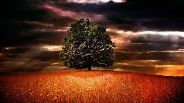 tree, lonely, branches