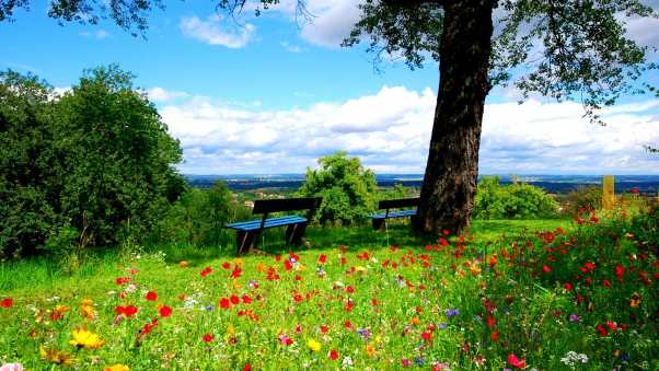 trees, benches, flowers