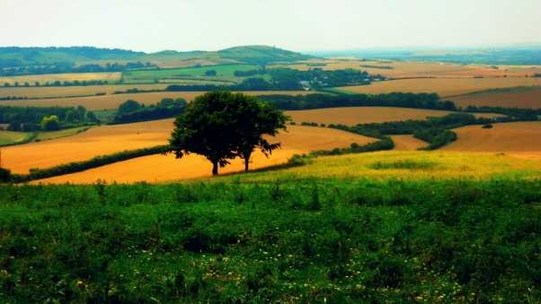 trees, fields, agriculture