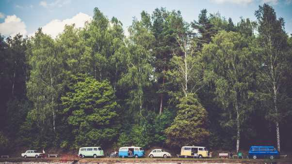 trees, forest, vans