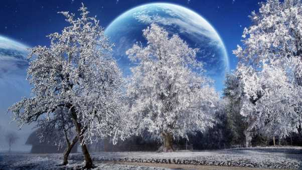 trees, hoarfrost, planet